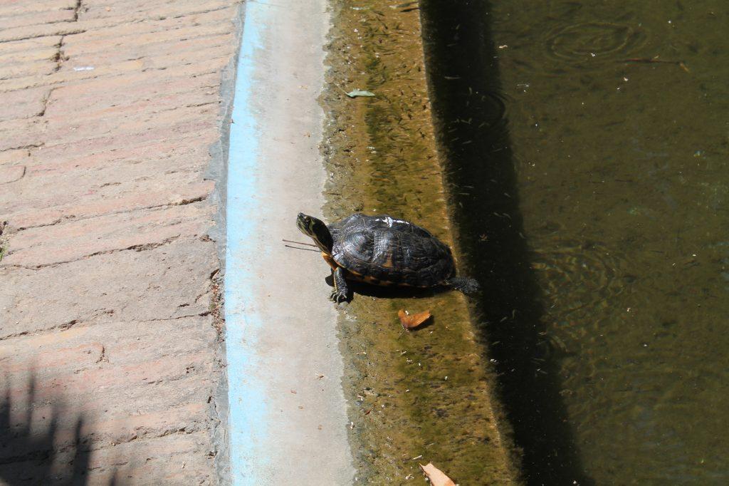 turtle in barcelona